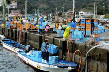Tōshijima's Sea Harvest