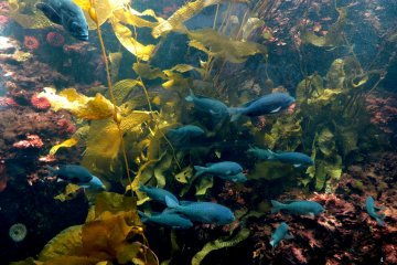 <p>If you don&#39;t dive, an aquarium is a wonderful way to see the mysterious underwater world</p>