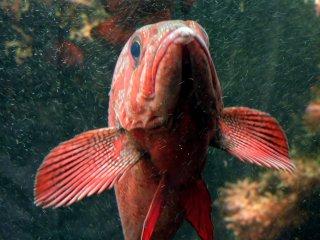 Paling tidak saya dapat berinteraksi lebih dekat dengan satu ekor ikan