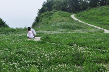 Clover Patch in Front of Teshima Art Museum