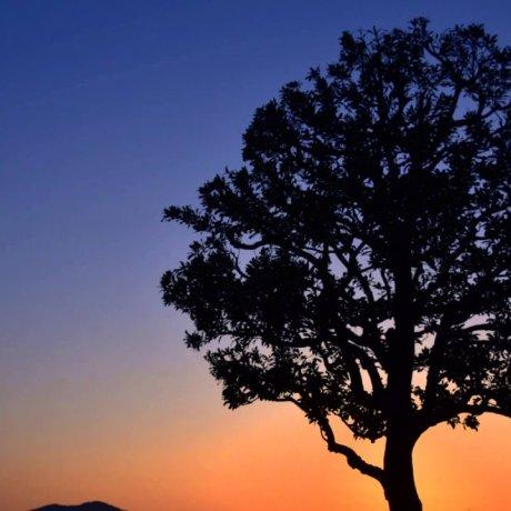 Senja di Taman Nishiyama Fukui