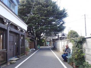 ต้นสนยักษ์กับร้านค้าเก่าแก่ในย่านยานากะ