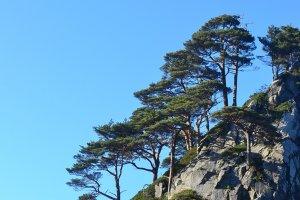 Pepohonan yang menumbuhi bebatuan di sepanjang pantai