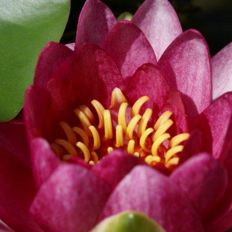 Ancient Lotus Garden