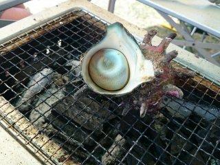 Delicious turban shells or in Japanese, sazaesan on sale
