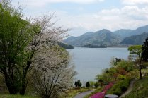 Spring Views Over Lake Miyagase