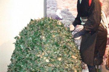 Exhibit showing tea plants