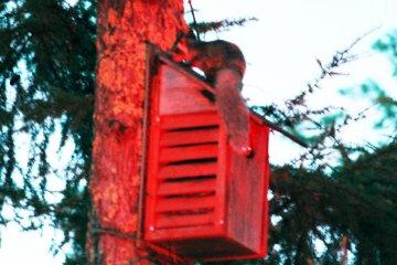 Picchio's Flying Squirrel Tour