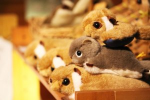 After the tour, you can buy a squirrel toy from the tourist centre shop
