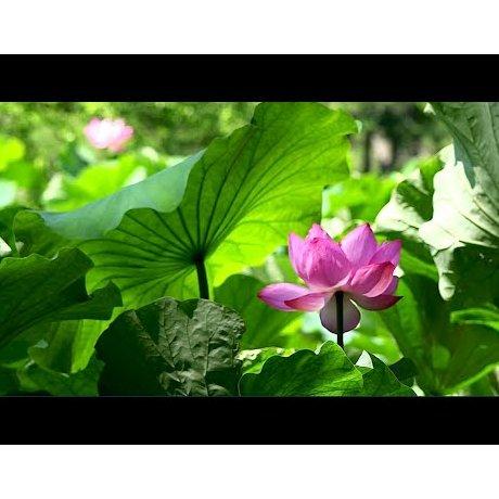 여름의 산케이엔 정원