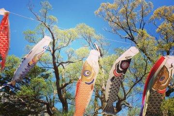 <p>五月份的时候河童桥上会挂上鲤鱼旗</p>