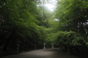 <p>The path is quite dark but ever so beautiful.</p>