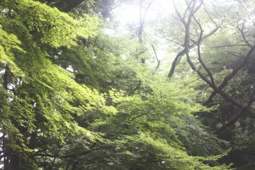 <p>The trees are so big and green here, some must be over 500 years old.</p>