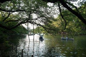 이노카시라 공원 호수호수