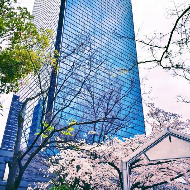 <p>One thing this city has managed to do that immediately struck me, is maintain a sense of co-existence. Man and nature, skyscrapers and blooming sakura.&nbsp;</p>