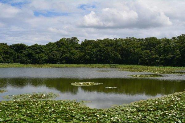 Озеро с кувшинками неподалеку от городка Авара
