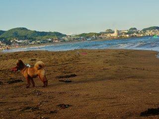 Même les chiens sont les bienvenus sur cette plage