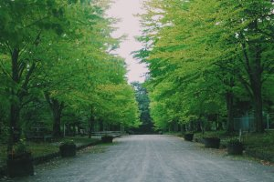 Hirosaki Park will make you calm.