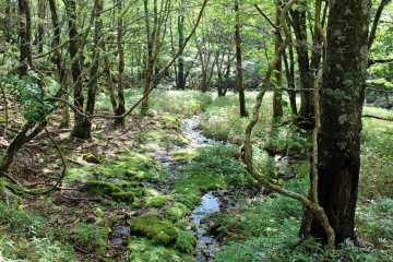 <p>With over 5 meters of annual precipitation there are lots of little streams and creeks &nbsp;</p>