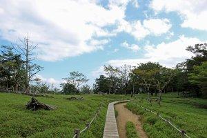 The path to Daijakura crossing a meadow