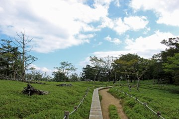 <p>The path to Daijakura crossing a meadow</p>