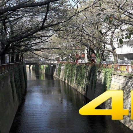 แม่น้ำ Nakameguro