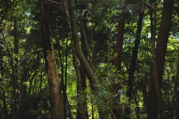 <p>Trees in the park</p>