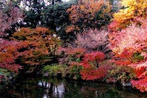 ใบไม้เปลี่ยนสีในสวนโทกุกาว่า
