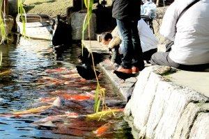 นักท่องเที่ยวชมปลาและให้อาหาร