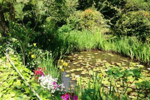 Claude Monet's water lilies is the inspiration behind this garden, one that connects that art inside and outside.
