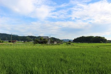 <p>The surrounding rice fields</p>