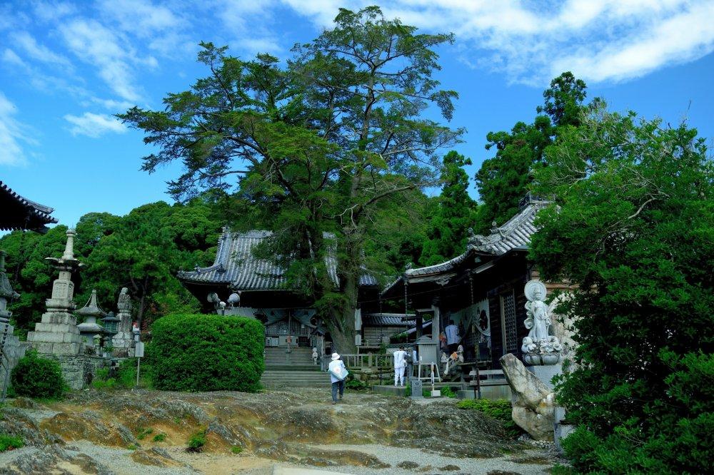 Jardim da Ryusuigan (templo nº 14)