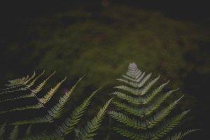 Ferns line the way