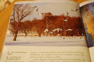 """ภาพแรกแห่งความประทับใจกับ """"ฝูงนกกระเรียนหงอนแดงที่คุชิโระ"""""""