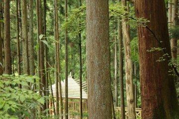 <p>An observation platform through the trees</p>