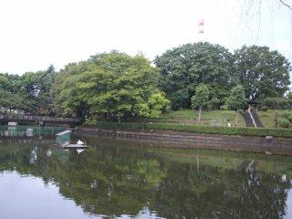 Озеро посередине парка