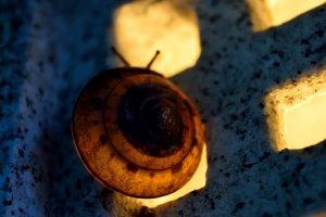 Un escargot sur une lampe