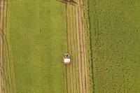 Thu hoạch lúa ở Fukui