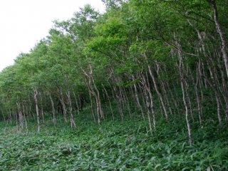 숲과 들판