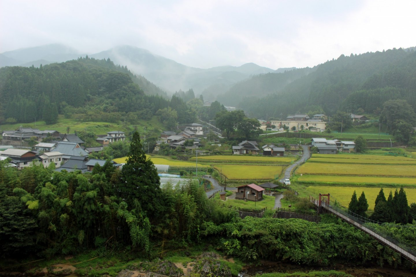 The golden rice paddies and misty mountains of Soni-mura in the rain