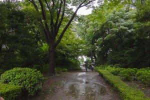 الممرات الضيقة وسط الاشجار