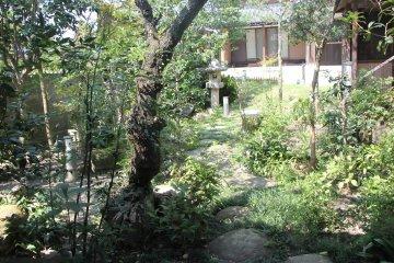 <p>Красивый сад на прилегающей территории</p>