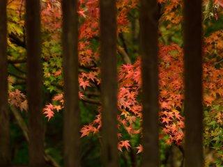 境内を秋色に染めて