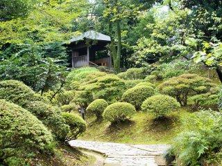 A quiet path in Koishikawa Korakuen