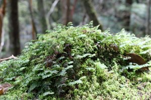 Moss on a rock mirrors the forest above in miniature