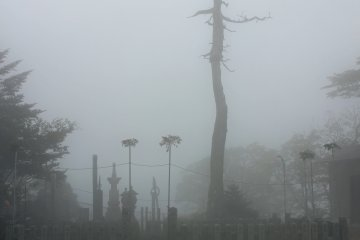 <p>A dead tree and a monument looming out of the fog near the main hall</p>