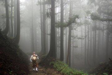 <p>A cloud forest!</p>