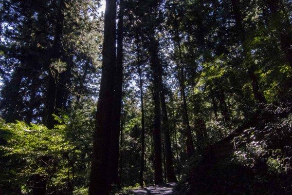 الطريق الى جبل ميتاك