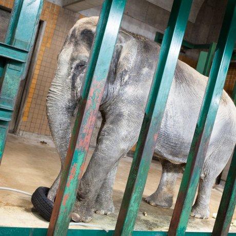 Le Zoo d'Inokashira