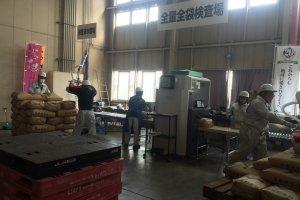 Pekerja menginspeksi radiasi pada beras